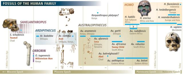 Fossils of Early Humans